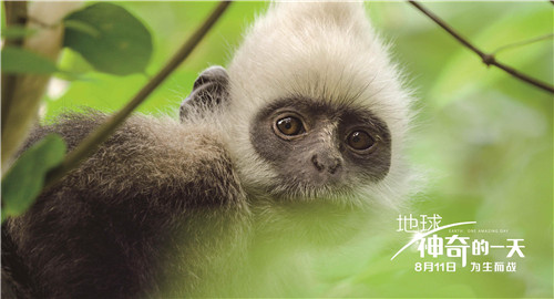 中英合作ドキュメンタリー映画「Earth: One Amazing Day」が11日中国公開